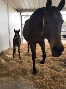 Horse and baby 2